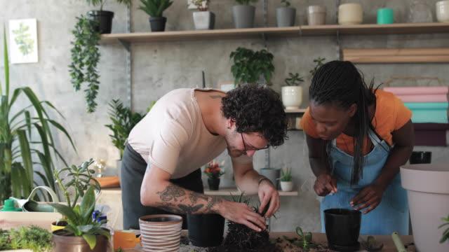 flower gardening business - flower pot stock videos and b-roll footage