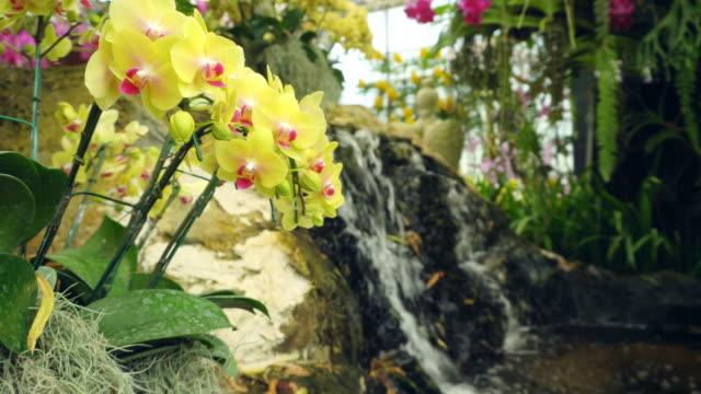 花の庭園 - ラン点の映像素材/bロール