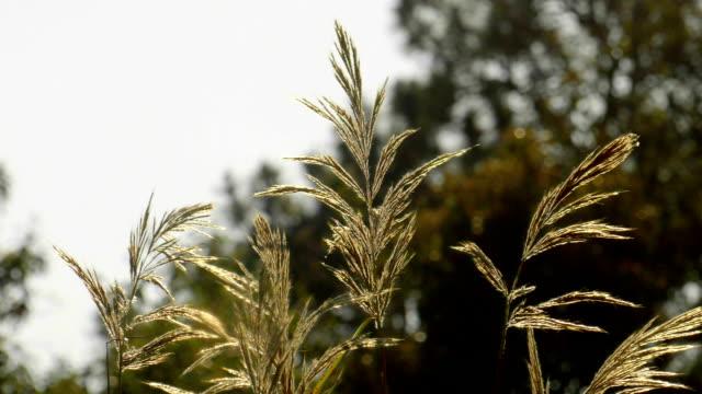 vídeos y material grabado en eventos de stock de flor, hierba, campo de la luz del sol - letra x
