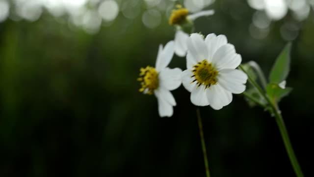 vidéos et rushes de fleur herbe mouvements sur le vent - sans mise au point and équilibre