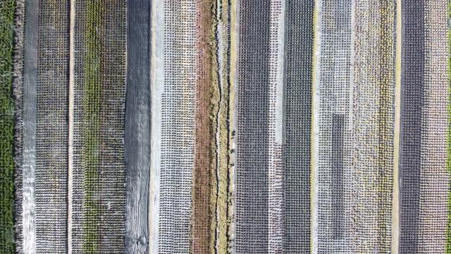 花温室空中ドローンの写真、ムグラ、トルコ - 最大点の映像素材/bロール