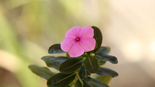 flower in breeze. - pistil stock videos & royalty-free footage