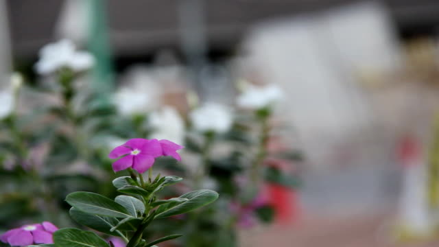 花のガーデン - 自生点の映像素材/bロール
