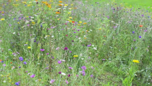 vidéos et rushes de fleurs dans le jardin d'été - parterre de fleurs