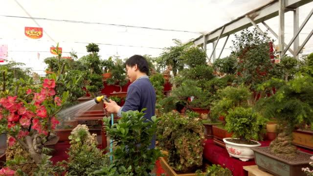 stockvideo's en b-roll-footage met flower market stall, xi'an,china. - kamerplant