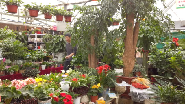 flower market stall, Xi'an,China.