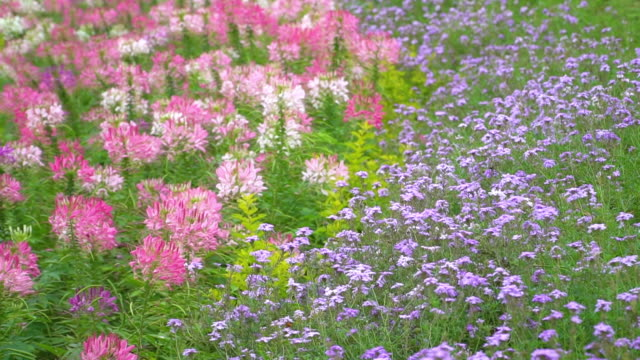 Flower meadow background.