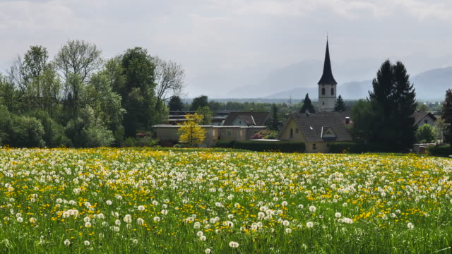 flower meadow with steeple - steeple stock videos & royalty-free footage