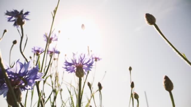 stockvideo's en b-roll-footage met flower moving in wind - enkele bloem