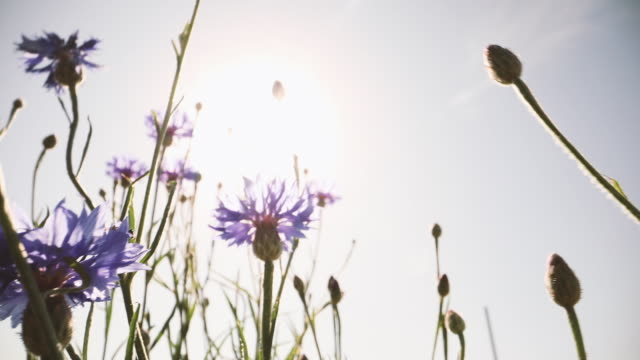 flower moving in wind - 一輪の花点の映像素材/bロール