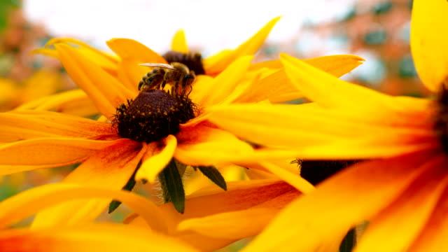Bloem van een echymic met een bee.