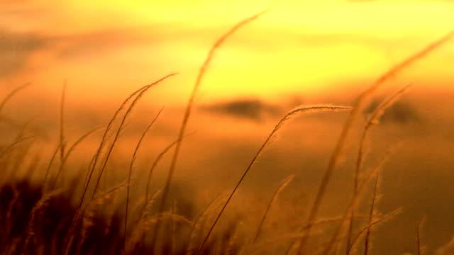 vidéos et rushes de fleurs au coucher du soleil - étamine