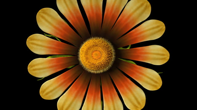 flower opening clean alpha matte - matte stock videos & royalty-free footage