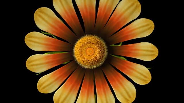 vídeos y material grabado en eventos de stock de flor que se limpia alpha matte - mate técnica de vídeo