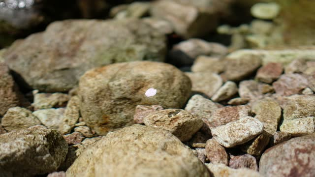 flower petal floating the river - surfacing stock videos & royalty-free footage