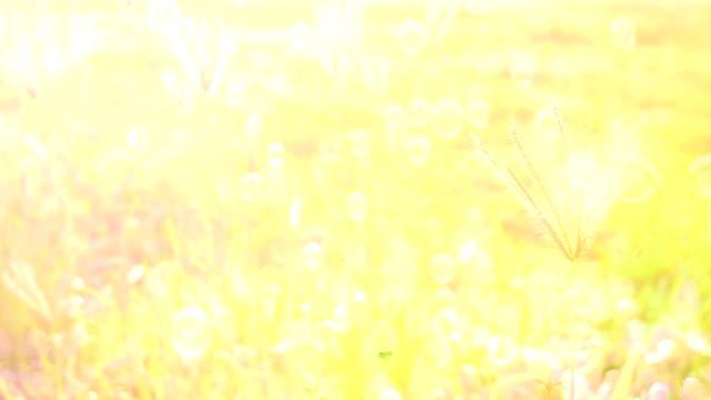 flower sun light in vintage tone - daisy stock videos & royalty-free footage