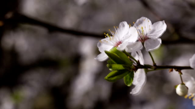 flower sways from strong winds. - may stock videos & royalty-free footage
