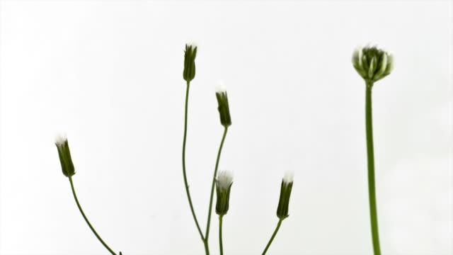 flower temptation