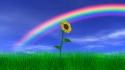 Flower Under a Rainbow