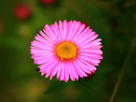 vidéos et rushes de pal : fleur - étamine