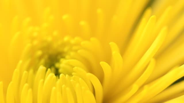 vídeos de stock e filmes b-roll de flower - beija flor