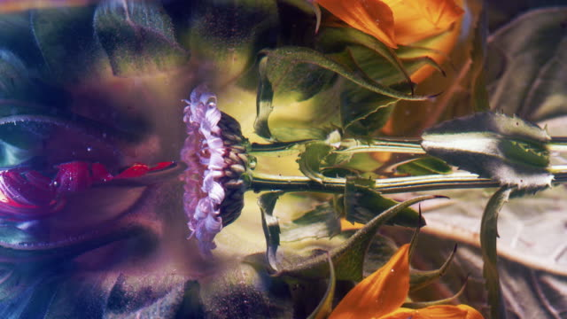 flower water reflection - lavender stock videos & royalty-free footage