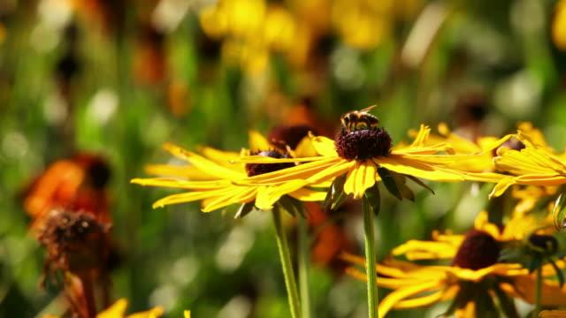 vídeos de stock, filmes e b-roll de abelha flor com - abelha obreira