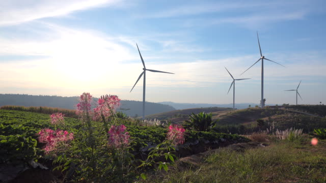 flowerfield and windmills - generator stock videos & royalty-free footage