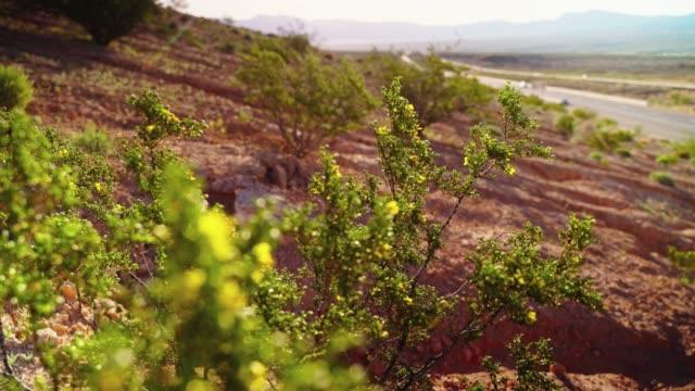 春先に遅いトラフィックを持つ高速道路の近くにアリゾナの砂漠でクレオソートブッシュを開花。フォアグラウンドの花に背景の高速道路からのゆっくりとフォーカスシフトとビデオ。 - ネバダ州クラーク郡点の映像素材/bロール