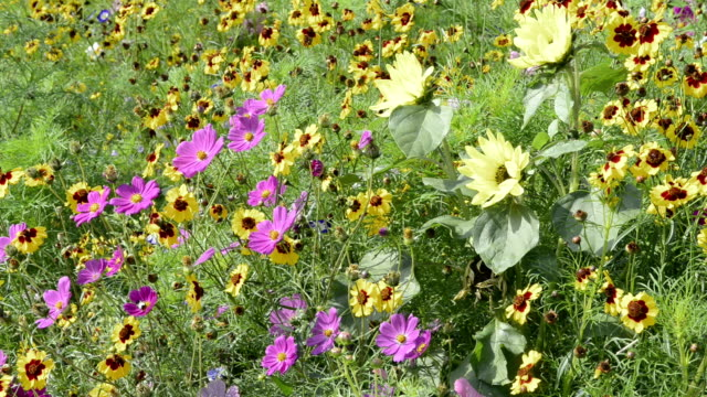 flowering meadow. - invertebrate stock videos & royalty-free footage
