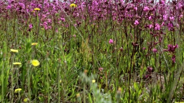 flowering of wildflowers. - wildflower stock videos & royalty-free footage