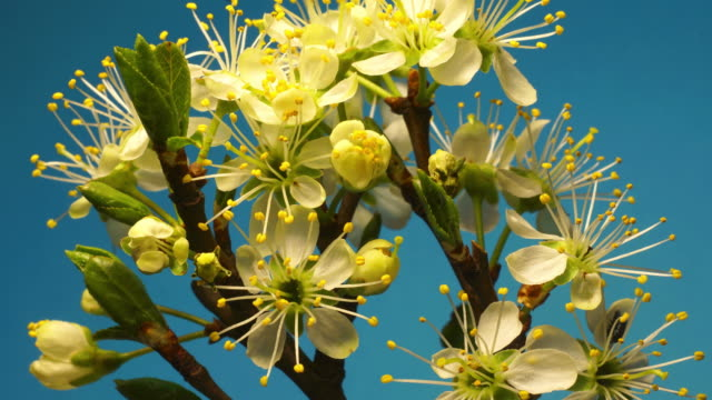 flowering plant - flowering plant stock videos & royalty-free footage