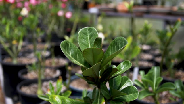 flowering plants in greenhouse - greenhouse stock videos & royalty-free footage