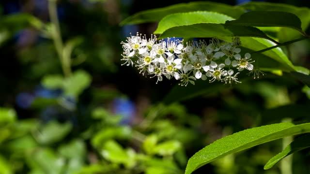 blühender baum im wald. wilde vegetation in der reserve. - baumgruppe stock-videos und b-roll-filmmaterial