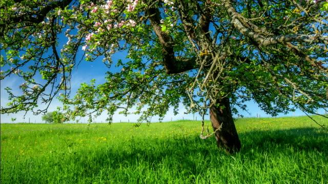 crane up: flowering tree - crane shot stock videos & royalty-free footage
