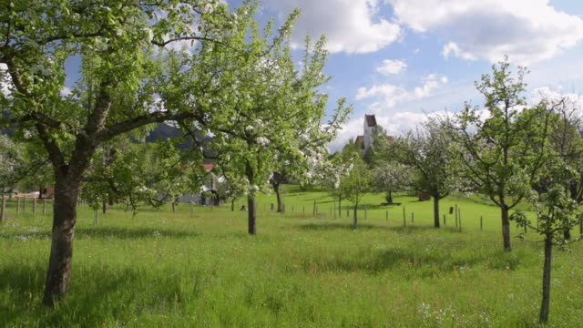 vidéos et rushes de pan flowering trees and church at chiemgauer alps - verger