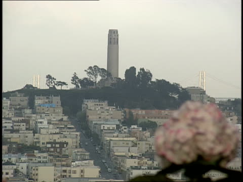 flowers and aerial shot of san francisco cityscape - trolleybus stock-videos und b-roll-filmmaterial