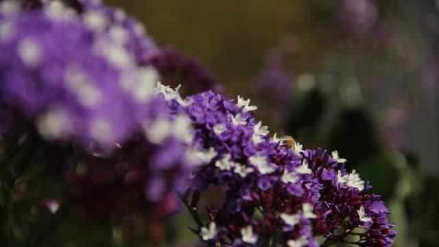 flowers and bees - ブンブン鳴る点の映像素材/bロール