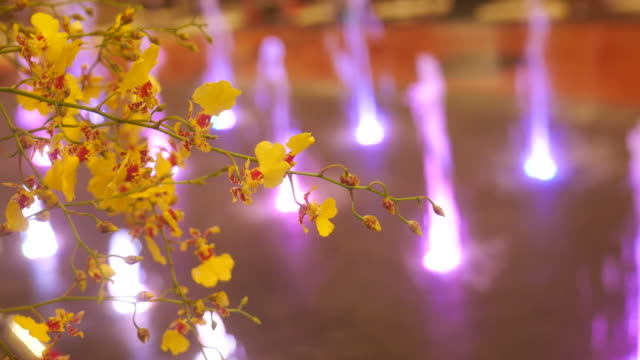flowers and fountain - rhythm stock videos and b-roll footage