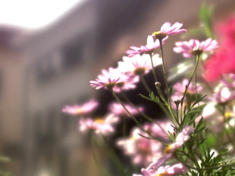flowers and people walking in the background. - differential focus stock videos and b-roll footage