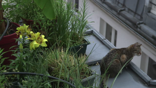 stockvideo's en b-roll-footage met flowers and plants on a roof with a cat - dak