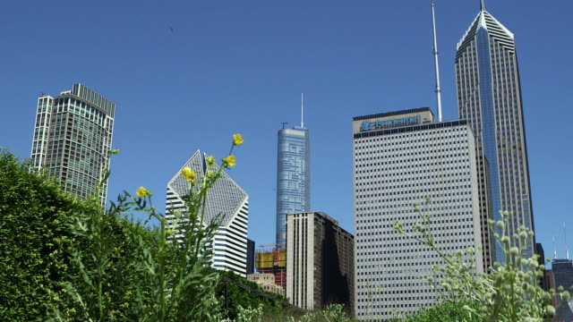 flowers and the chicago skyline - one prudential plaza stock videos & royalty-free footage