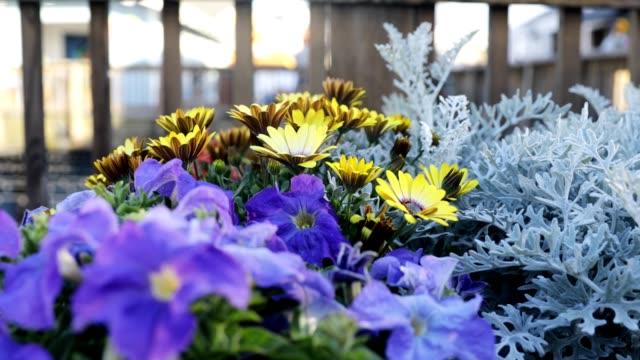 stockvideo's en b-roll-footage met bloemen bij pier 39 - pier 39