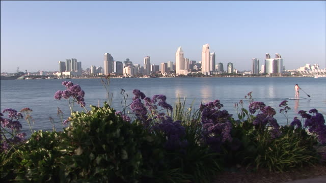 Flowers bloom across the harbor from downtown San Diego.