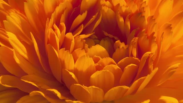 vidéos et rushes de flowers blooming - yellow