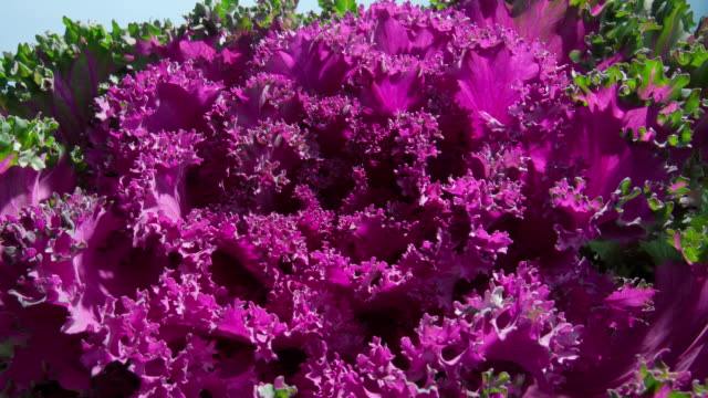 flowers blooming - kale stock videos and b-roll footage