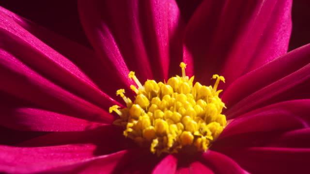 stockvideo's en b-roll-footage met flowers blooming - meeldraad