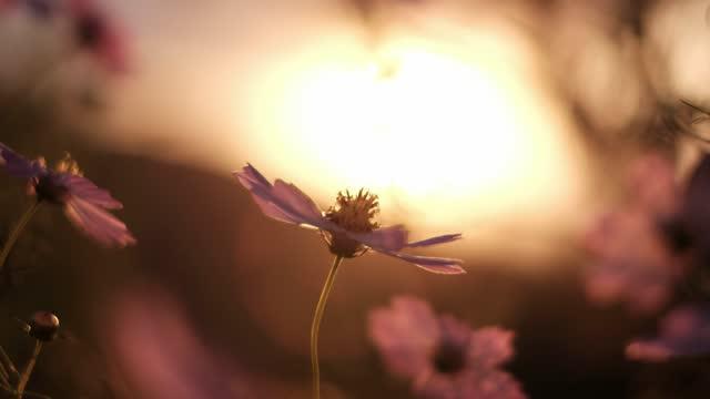 flowers brown by the wind - 期待点の映像素材/bロール