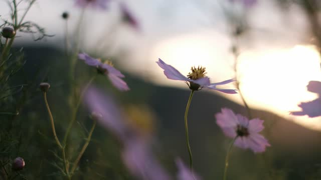 flowers brown by the wind - swaying stock videos & royalty-free footage