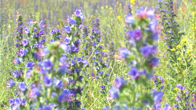 flowers + close-up - film montage stock videos & royalty-free footage